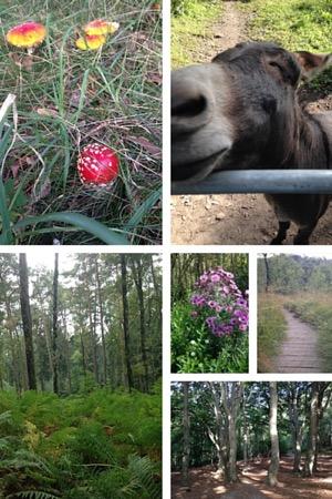 Impressionen aus dem Birgeler Urwald. Fotos: Heide Liebmann